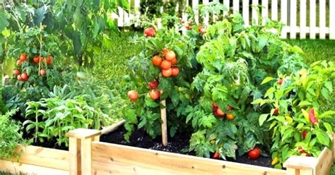 garden fruits and vegetables how a fruit and vegetable garden be made beautiful with