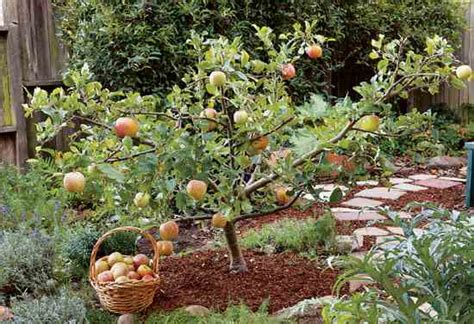 small trees for sale create small fruit trees with this pruning method