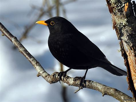 black bird inspirational storytellers it s a blackbird