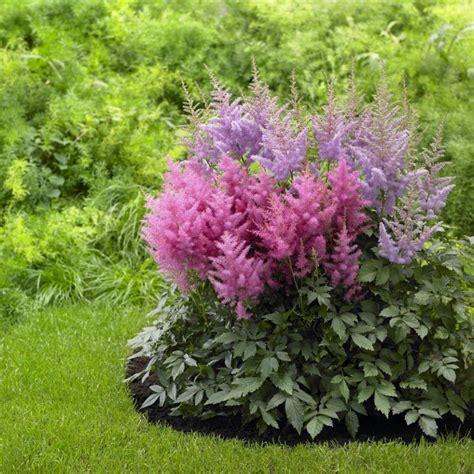 flowers shade garden perennial flowers for shade gardens hgtv