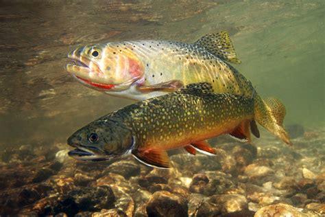 fishing trout fishing manashtash lake brook trout lost lake ellensburg