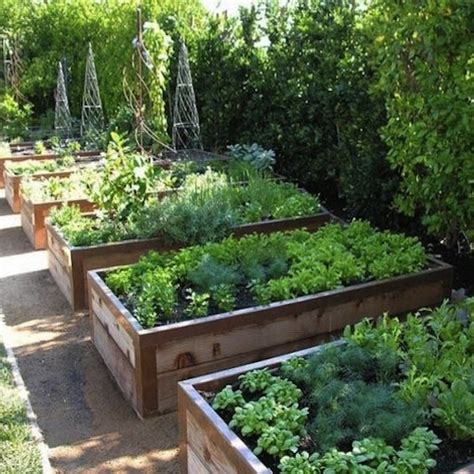 raised bed vegetable garden advice for uk raised bed vegetable growers inc discounts