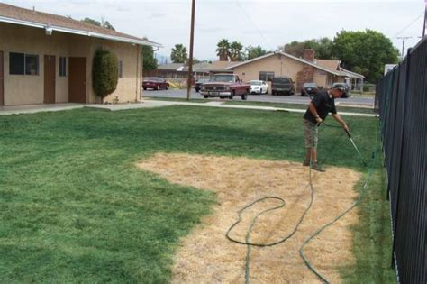 spray paint yard californians pay to their lawns spray painted green