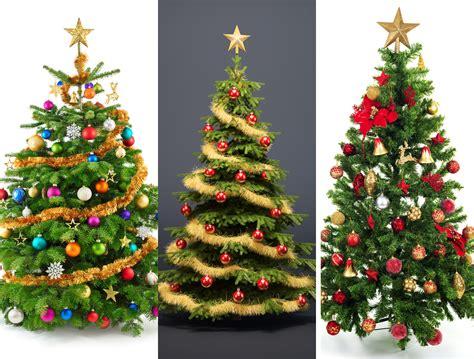 weihnachtsbaum tanne was ist f 252 r euch der perfekte weihnachtsbaum fichte