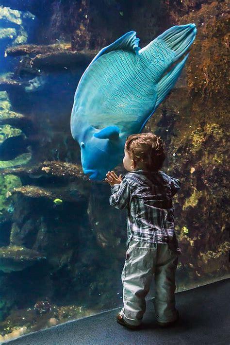 best 20 nausicaa aquarium ideas on