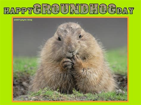 groundhog day happy day 25 best groundhog day pictures and images