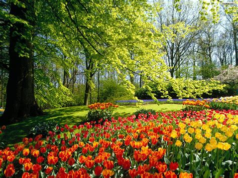 beautiful flower garden wallpaper image collection beautiful flower garden wallpapers