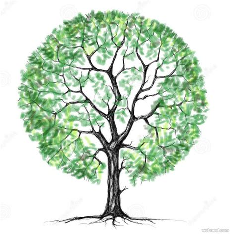tree drawings www pixshark images galleries with a