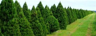melbourne trees trees melbourne farm 28 images melbourne tree farm