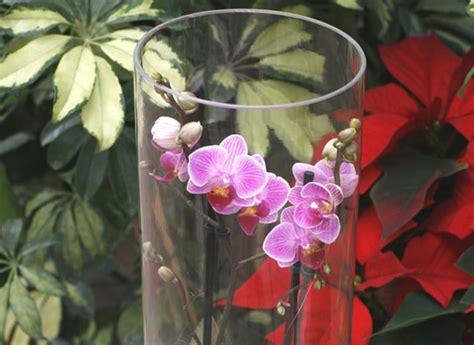 cultiver les orchid 233 es en vase