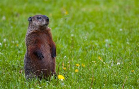 groundhog day of today is groundhog day williamson source