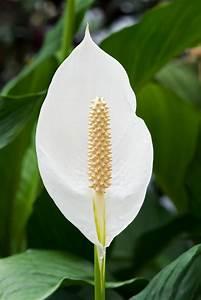 Pflegeleichte Zimmerpflanzen Mit Blüten : beliebte zimmerpflanzen sch ne pflegeleichte gr npflanzen ~ Markanthonyermac.com Haus und Dekorationen