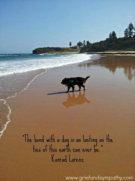 Dog Loss Quotes Custom Best 25 Ideas About Loss Quotes  Find What You'll Love