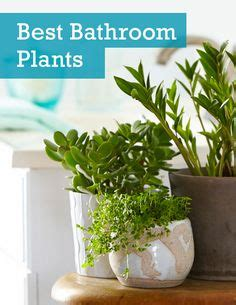 1000 ideas about indoor bamboo plant on lucky