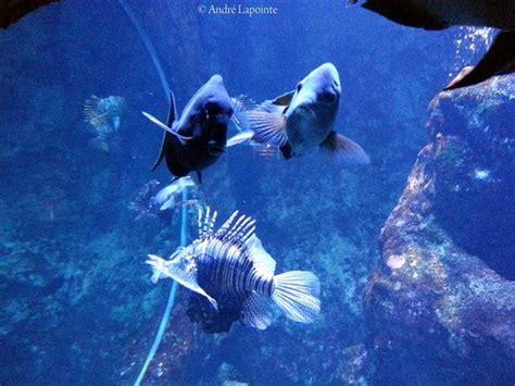 aquarium de la r 233 union gilles les bains les avis sur aquarium de la r 233 union tripadvisor