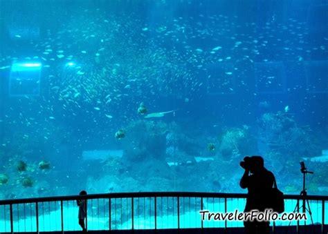 marine park world s largest oceanarium rwsentosa singapore travel lifestyle