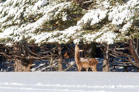 r 201 serve biologique des monts d azur parcs de d 233 couverte la clef verte qualit 233 tourisme c 244 te