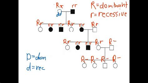 Pedigree 1  Worksheet Youtube