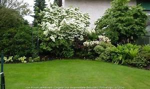 Schnellwachsende Sträucher Als Sichtschutz : str ucher heckenpflanzen hartriegel rosen forum ~ Markanthonyermac.com Haus und Dekorationen
