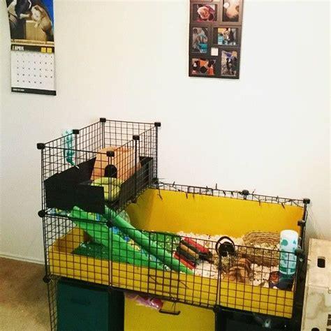 best 25 guinea pigs ideas on guinea