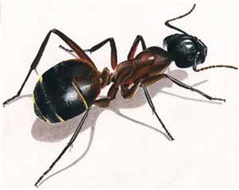 r 234 ver de fourmi en islam