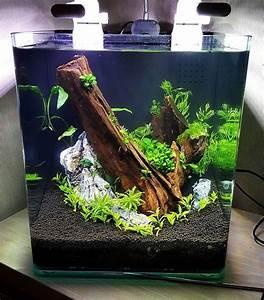 Coole Aquarium Deko : die besten 25 aquascaping ideen auf pinterest aquarium aquarium ideen und aquarium ~ Markanthonyermac.com Haus und Dekorationen