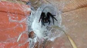 Arachnophobes beware! Shudder-inducing video captures ...