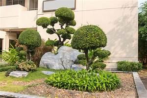 Dekorative Bäume Für Kleine Gärten : baum f r den vorgarten diese zeigen hier wirkung ~ Markanthonyermac.com Haus und Dekorationen