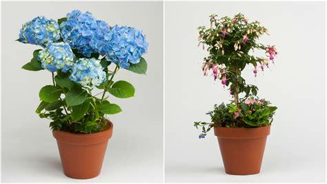 patio pots archives robertson s flowers