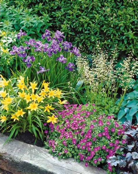 Collection «massif Fleuri»  12 Plantesvivaces Nouvelles