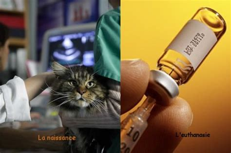 avantages et inconv 233 nients de agathe veterinaire