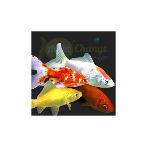 ornement aquarium archives page 3 of 14 poisson naturel