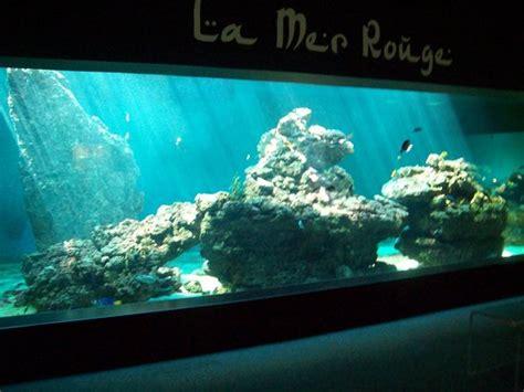 aquarium le 7eme continent talmont hilaire les avis sur aquarium le 7eme continent