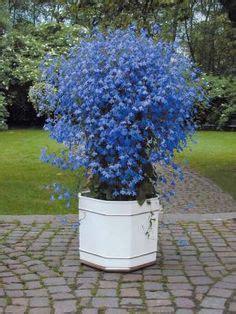1000 id 233 es sur le th 232 me plantes d ombre sur jardin ombrag 233 plantes vivaces et heuchera
