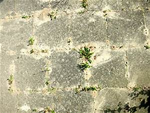 Hilft Mehl Gegen Ameisen : was hilft gegen ameisen im garten kleinster mobiler gasgrill ~ Whattoseeinmadrid.com Haus und Dekorationen