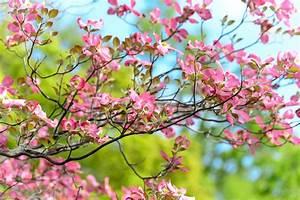 Dekorative Bäume Für Kleine Gärten : kleine g rten folge 2 b ume str ucher kraut r ben ~ Markanthonyermac.com Haus und Dekorationen