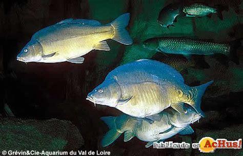 achus gt aquarium du val de loire