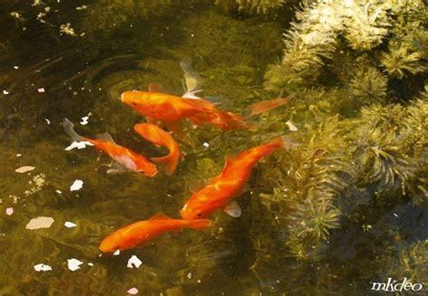 confiez moi vos poissons poisson le des amis du poisson