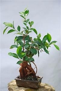 Feng Shui Pflanzen Reichtum : zimmerpflanzen nach feng shui ratgeber ~ Markanthonyermac.com Haus und Dekorationen