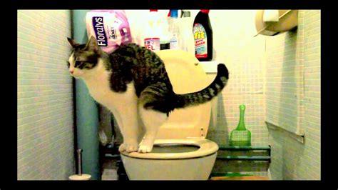 mon chat va aux toilettes et tire la chasse d eau comme un grand