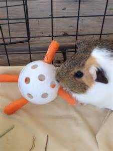 cheap guinea pig bedding piggy bedspreads washable reusable bedding for your guinea pig