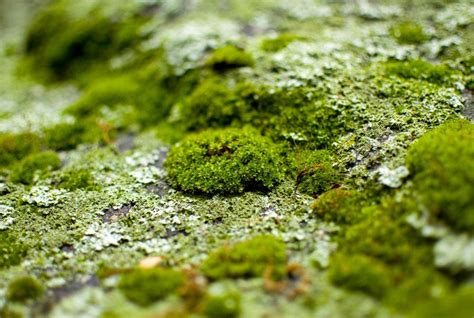 How Can I Get Moss To Grow In My Garden? Firestone Epdm Rubber Roofing Reviews How To Vent Bathroom Fan Through Roof Ask This Old House Shingles Metal Phoenix Az Much Is Per Square Foot Install Asphalt Shingle Arlington Rooftop Bar And Grill Yelp Leakage Repair Singapore