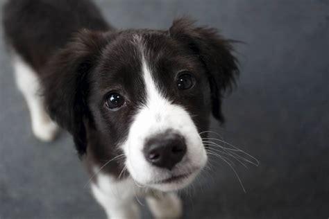 Welcher Hund Passt Zu Mir?