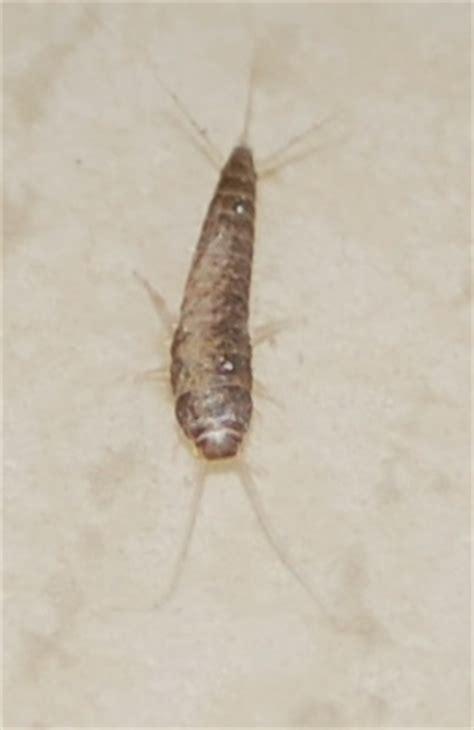 identification insecte de bois forum d entraide