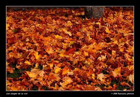 124 176 tapis de feuilles mortes les images de la vie