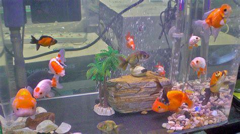 d 233 coration aquarium poisson