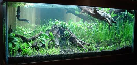 mon aquarium expat 224 bangalore