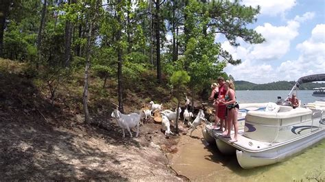 On A Boat Youtube by Goat On A Boat At Billy Goat Island Lake Martin Youtube