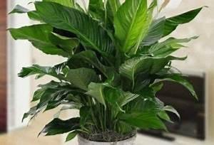 Große Zimmerpflanzen Pflegeleicht : zimmerpflanzen ohne licht zimmerpflanzen die mit wenig licht gut auskommen trendomat com ~ Markanthonyermac.com Haus und Dekorationen