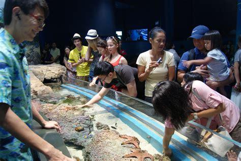 file discovery touch pool s e a aquarium marine park resorts world sentosa singapore